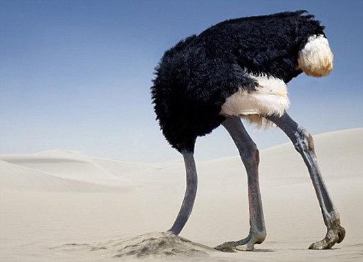 Секс со страусом человек